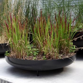 Bepflanzt mit Gras
