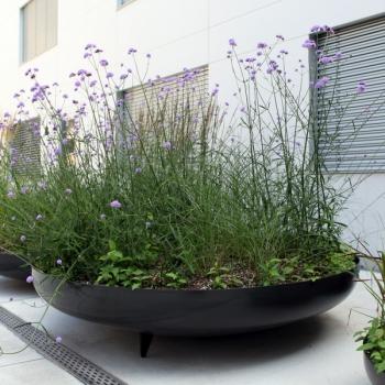 Schale für Pflanzen
